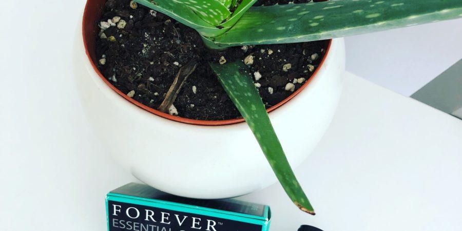 aloe vera plante en pot